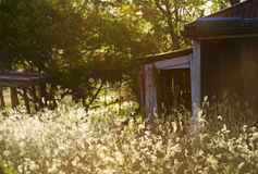 Old run down abandoned empty house overgrown long grass and weeds Royalty Free Stock Photos