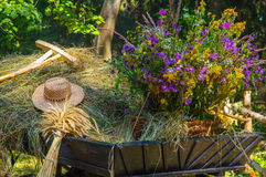 Old rural cart with dry grass and wildflowers. Old wooden cart with flowers Stock Photo
