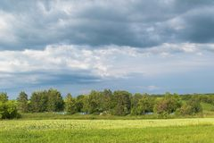 Old rural cemetery in the trees in the middle of grass meadows under the cloudy sky on a sunny summer day Stock Image