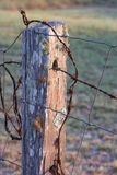 Old Rural Fence Post Stock Image