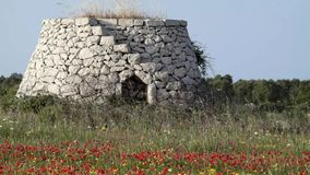 Old rural house with poppies - Salento - Italy stock footage