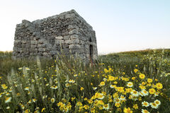 Old rural house in salento with a beautiful lawn of flowers - Italy. Old rural house in salento with a beautiful lawn of flowers Italy Stock Photos
