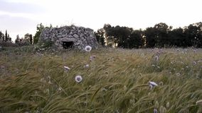 Old rural house in southern italy with strong wind  - salento stock footage