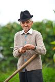Old rural man using scythe Stock Photo