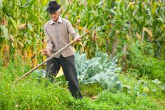 Old rural man using scythe. Senior farmer using scythe to mow the lawn traditionally Royalty Free Stock Images
