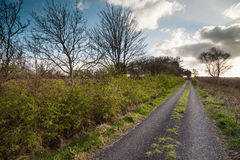 Old rural road in the irish countryside Royalty Free Stock Images