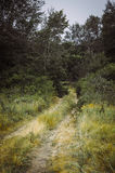 Old rural road in summertime. Royalty Free Stock Photography