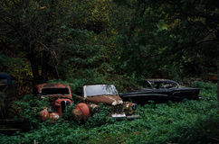 Old rusted retro cars that has been abandoned in woods Royalty Free Stock Photos