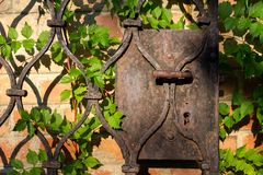 An old rusted wrought iron gate detail, door handle, in front of a brick wall and some twiner plant stock photo