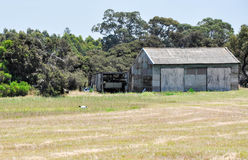 Old Rustic Barn with White Ibis in Grassy Field Stock Photos