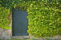 Old Rustic door. Surrounded by green leafs Royalty Free Stock Image