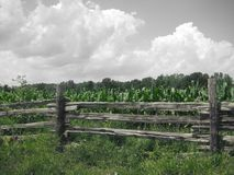 Wood fence in cornfield with cloudy sky Stock Photos