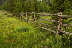 Old Rustic Fence and Wildflowers In Colorado Royalty Free Stock Photography
