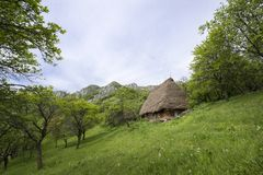 Old rustic house in a green orchard Stock Images
