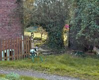 An old rustic metal rocking horse is in a green garden. Brick wall and timber fence behind Stock Photo