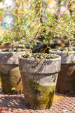 Old rustic plant pots Stock Photo