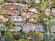 Old rustic red stone wall covered by green moss and plants. An old rustic red stone wall covered by green moss and plants Stock Photos
