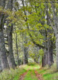 Old rustic road at the Vidzeme elevation, Latvia,. Europe Royalty Free Stock Images