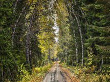 Old rustic road at the Vidzeme elevation, Latvia,. Europe Royalty Free Stock Photos