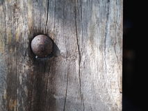 Old rustic weathered round flat head tightened screw. Bolt installed on a rustic log wood piece under uneven evening sunlight Royalty Free Stock Images