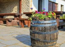 Old rustic wine barrel with flowers. Wine background in Europe. Czech Republic, South Moravia.  royalty free stock image