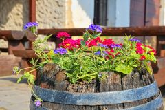 Old rustic wine barrel with flowers. Wine background in Europe. Czech Republic, South Moravia.  royalty free stock photo