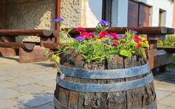 Old rustic wine barrel with flowers. Wine background in Europe. Czech Republic, South Moravia.  royalty free stock images