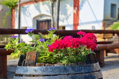 Old rustic wine barrel with flowers. Wine background in Europe. Czech Republic, South Moravia.  stock photo