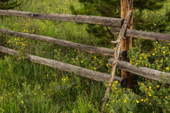 Old Rustic Wood Fence and Wildflowers in Colorado Stock Photos