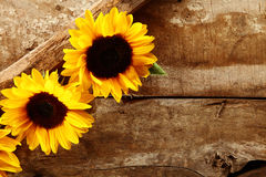 Old rustic wooden background with sunflowers Stock Photo
