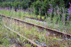 Old rusty abandoned railways overgrown with willow-herb stock photo