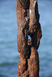 Old rusty anchor chain Royalty Free Stock Photo