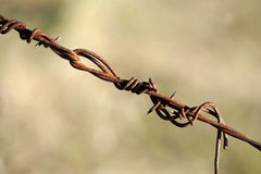 Old rusty barbed wire Royalty Free Stock Image