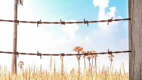 Old and rusty barbed wire 3D render. On background of golden rice With color affect vintage style Royalty Free Stock Photos