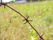 Old rusty barbed wire fence Royalty Free Stock Images