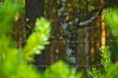 Old rusty barbed wire in a sunny forest. Royalty Free Stock Photo
