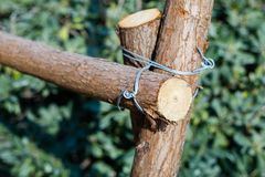 Wood wire link. Old rusty barbed wire on wood post with chain link Stock Image