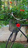 Old rusty bicycle with roses in front basket 4 Royalty Free Stock Photography
