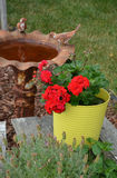 Old rusty birdbath. And flowerpot full of red geraniums Stock Images