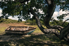 Old rusty boat on the grass. Under big three Royalty Free Stock Photo