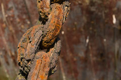 Old rusty chain Royalty Free Stock Image