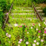 Old rusty empty railway with growing Cosmos flowers. Nature beats industry stock photos