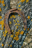 Old rusty horseshoe. Stock Photos