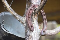 Old rusty horseshoe on a tree royalty free stock photography