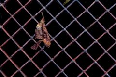 Old rusty lattice Royalty Free Stock Images