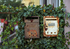 Old rusty mailboxes with ivy Stock Image