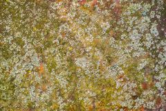 Old rusty metal plate with lichen and moss stock photos
