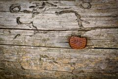 An old rusty nail is hammered into a wooden surface.  stock images