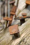 Old rusty nails. In the wood Royalty Free Stock Photography