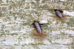 Old rusty nails in wooden board.  Royalty Free Stock Photos